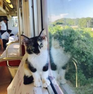 Kafić sa mačkama u vozu = SAMO u Japanu!