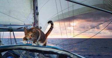 Mačka Amelija Tropicat - priča o ljubavi i prijateljstvu