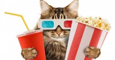 Otvara se prvi bioskop sa mačkama - Cat Cinema!