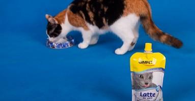Mačke i mleko