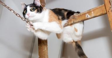 Idealna težina mačke