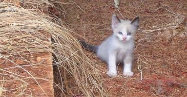Vakcinacija mačaka