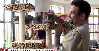Mačke obogaćuju život zatvorenika u kazneno-popravnoj instituciji!