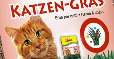 Katzen-gras trava za mačke