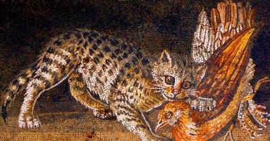 Arheologija domaće mačke