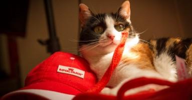 Šta treba kućnoj mački da bi bila srećna?