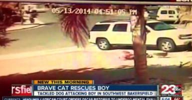 Mačka odbranila dete od psa