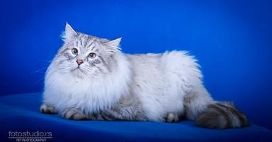Želite mačku ali ste alergični? Postoji rešenje!