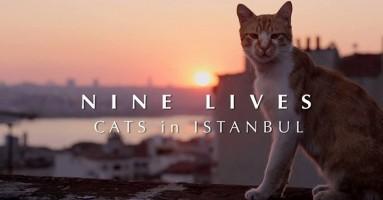 Istanbul, raj za mačke? Itekako.