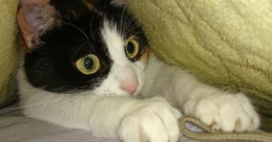 10 netačnih verovanja o mačkama