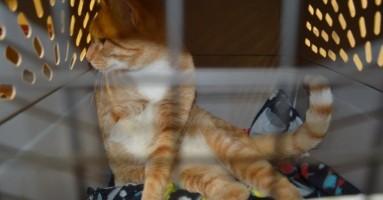 """Mačka se """"švercovala"""" više od 3500 kilometara!"""