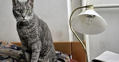 Mačak Pera - kraj jednog savremenika