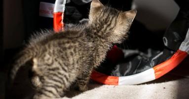 Mačke bolje od pasa za traženje i spasavanje ljudi?