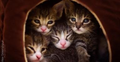 Pet napuštenih pa spasenih mačića