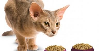 Ishrana mačke