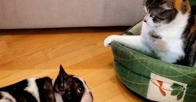 Štene tera mačku iz svog krevetića - ko je uporniji? (VIDEO)