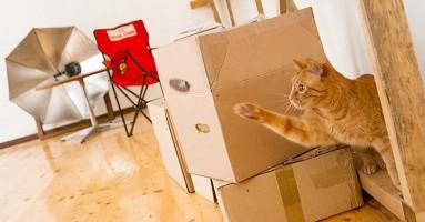 Zašto mačke obožavaju kutije? Misterija je, izgleda, rešena!