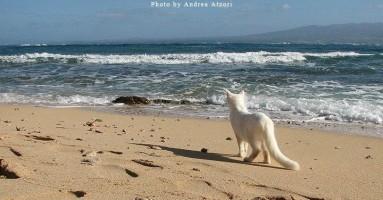 Mačja kolonija na Sardiniji