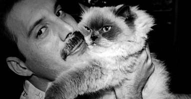 Najveći ljubitelj mačaka među rokerima