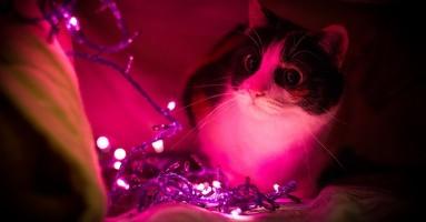 Mačke, vatromet i petarde...