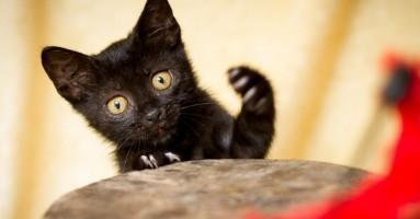 Zašto su mačke izbirljive po pitanju hrane?