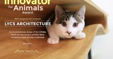 Radni sto za vlasnike mačaka
