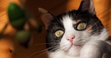 Šta bi bilo kad bi mačke progovorile?!