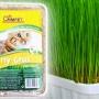 Hy-Gras mačja trava