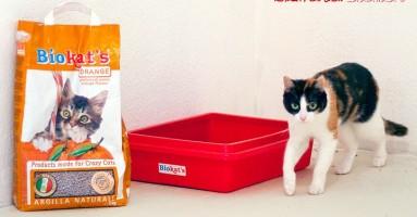 Kako čistiti mačji urin?