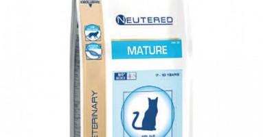 Mature Cat