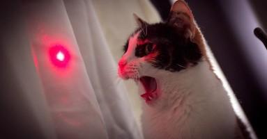 Zašto laser možda nije dobar za vašu mačku? (Nije ono što mislite!)