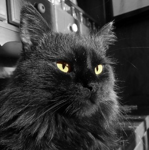 Priče o crnim mačkama