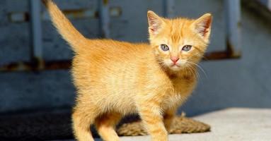 Želite da svojoj mački PRODUŽITE život? Evo i kako!
