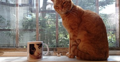Ishrana i nega starije mačke